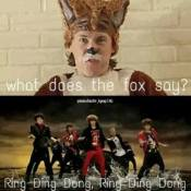 rind ding dong what does the fox say shinee meme ylvis